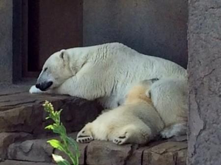 ララと赤ちゃん昼寝