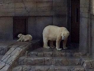 シロクマ、ララと赤ちゃん